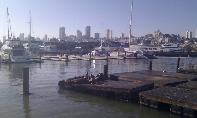 Leones marinos en San Francisco